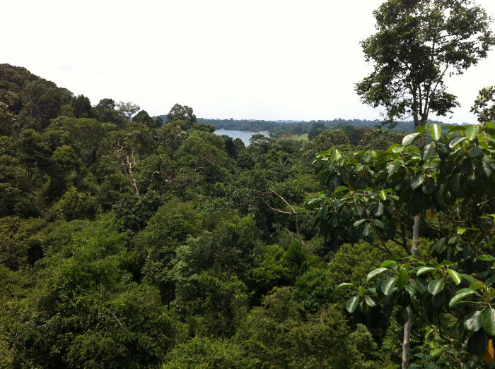 View from Tree Top Walk