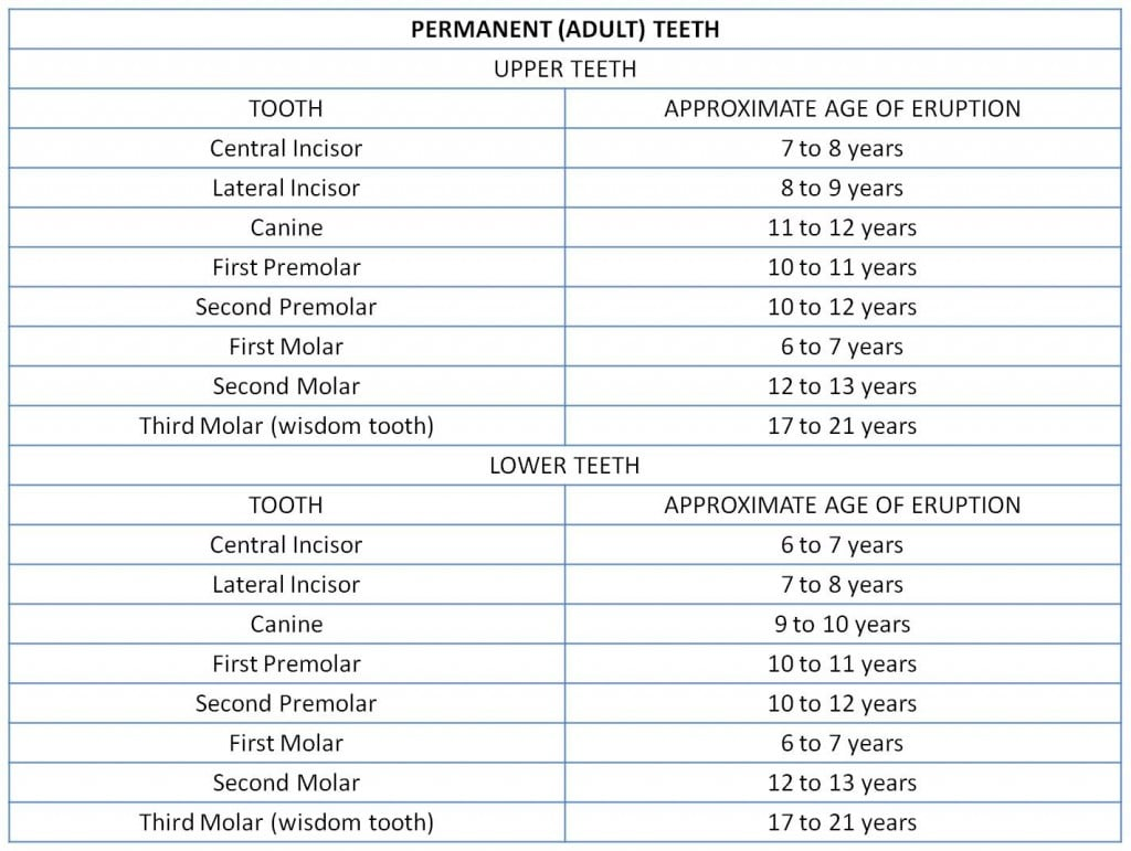 adult teeth tracking table