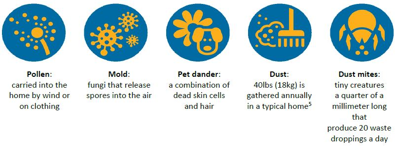 common indoor allergens