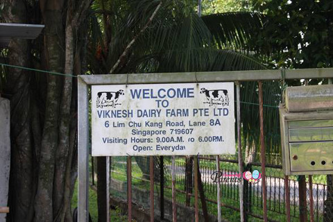 viknesh dairy farm opening hours
