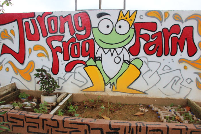 Frog Farm in Singapore