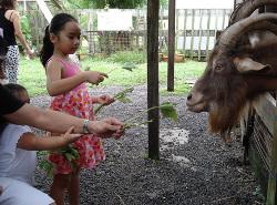 Singapore Goat Farm