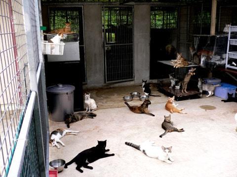 cats in ericsson pet farm
