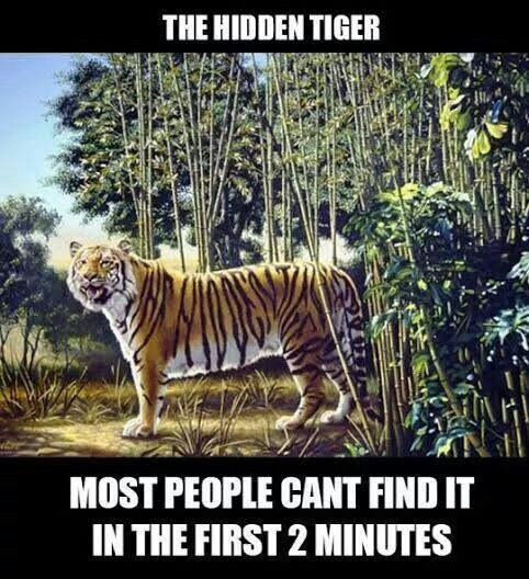 the hidden tiger game