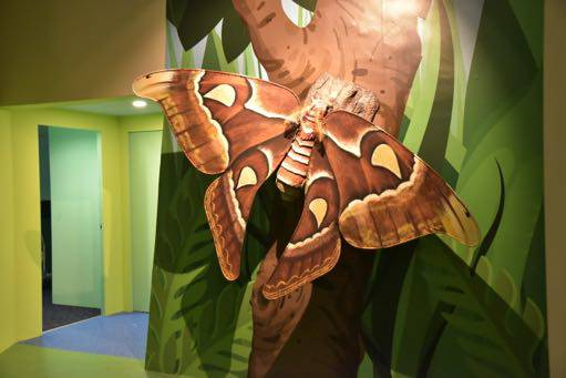 Atlas Moth - Butterflies Up-Close Singapore Science Centre