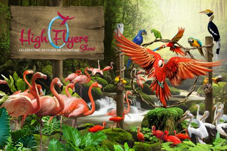 High flyers bird show at Jurong Bird Park