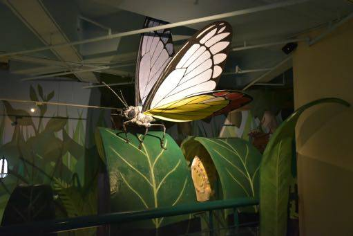 butterfly exhibit at butteflies up-close
