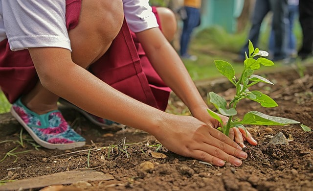 planting for kids