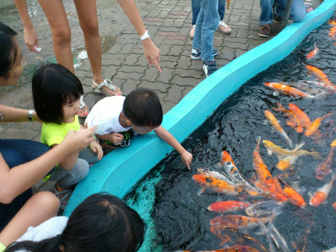 pasir ris kids kampong fish feeding