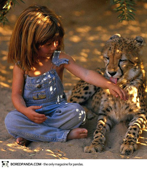 tippi with a cheetah