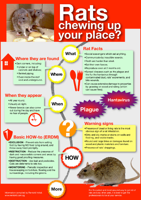 protecting your home from rats