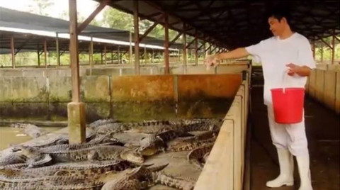 crocodile farm singapore