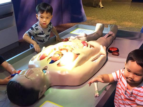Human Body at KidsStop