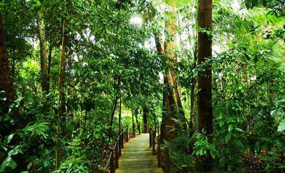 Singapore Botanic Gardens Rainforest Trail
