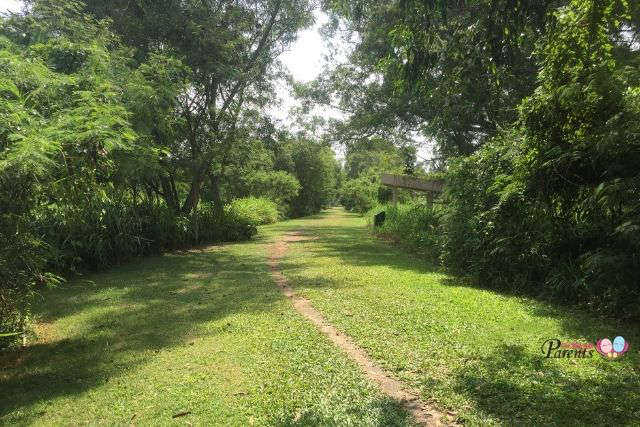 Walking Nature Trails in Singapore - Tampines Eco Green
