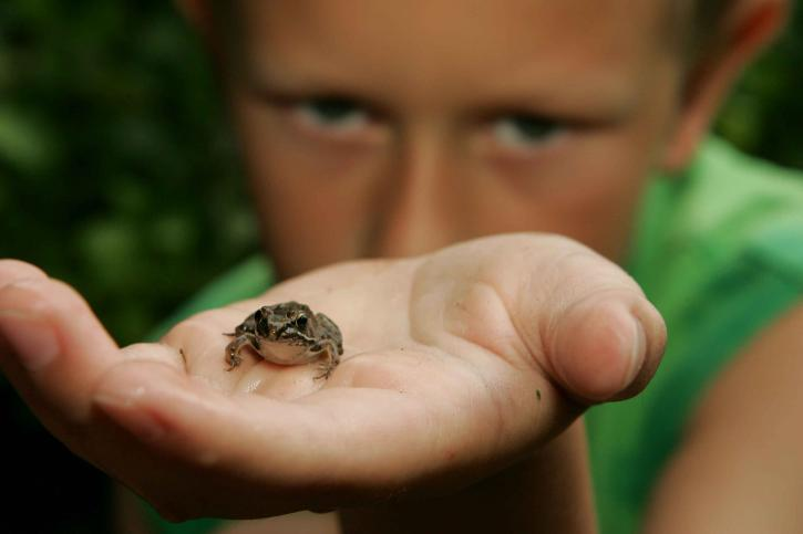 boy holding a frog