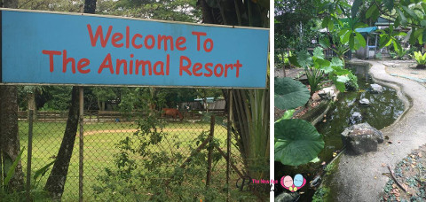 the animal resort stream
