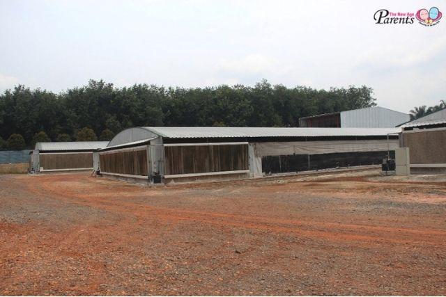 Kee Song Farm at Yong Peng Malaysia
