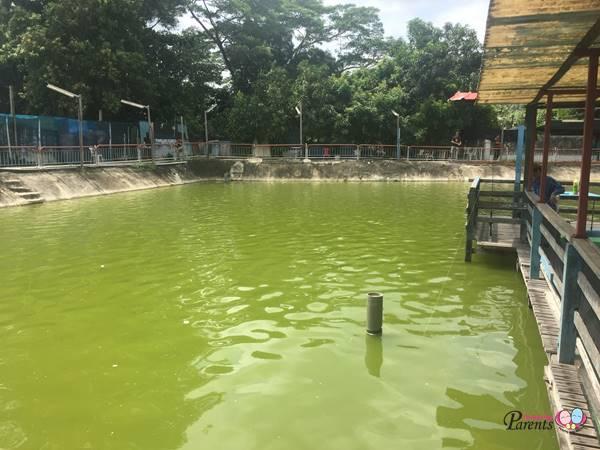 pond fishing at Hausmann Marketing Aquarium Singapore