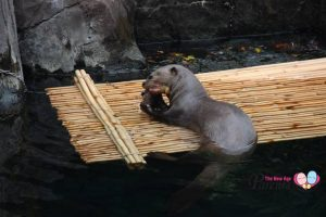 Where To See Otters In Singapore
