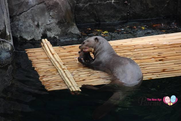 otter in river safari