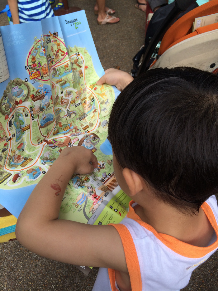 What you can do with kids at The Singapore Zoo