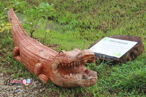 crocodile warning signs in kranji marshes singapore