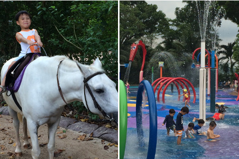 Things Kids Can Do And Learn At The Singapore Zoo
