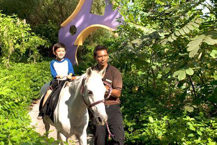 Singapore zoo pony