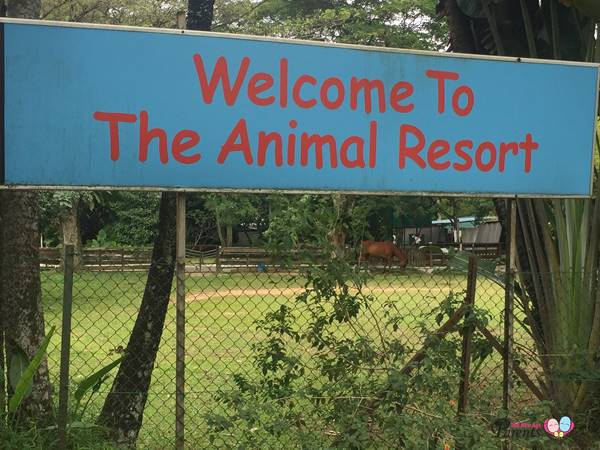 The Animal Resort Seletar West Farmway Singapore