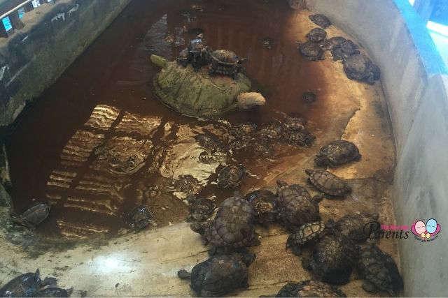 Tortoise enclosure at Hausmann Marketing Aquarium