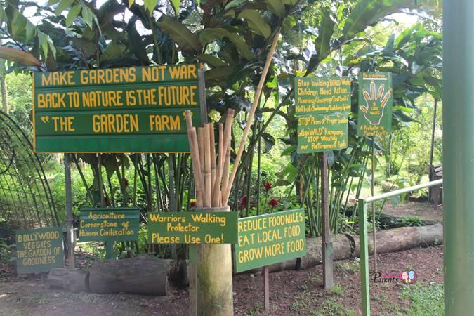 bollywood veggies organic farm singapore