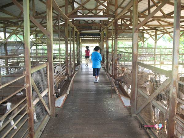 hay dairies goat farm in singapore