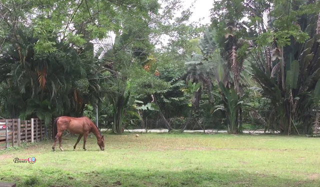 lone horse in the animal resort singapore