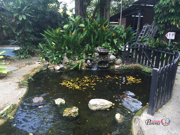 lovely pond in the animal resort singapore