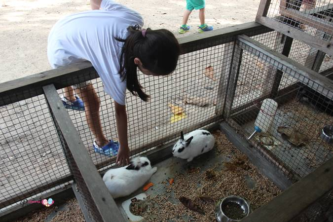 patting rabbits in animal resort singapore