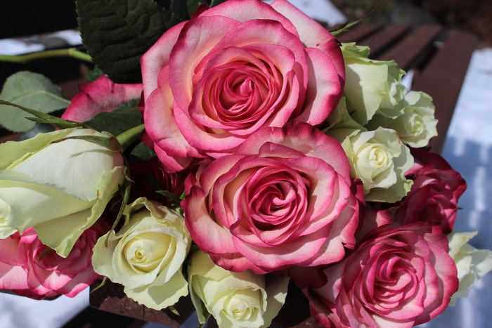 10 Kinds Of Flowers You Can Give Your Wife On Her Birthday - Roses