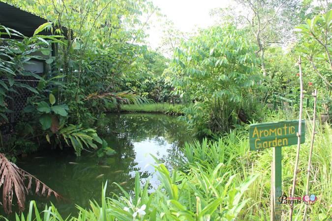 aromatic garden in bollywood farm singapore