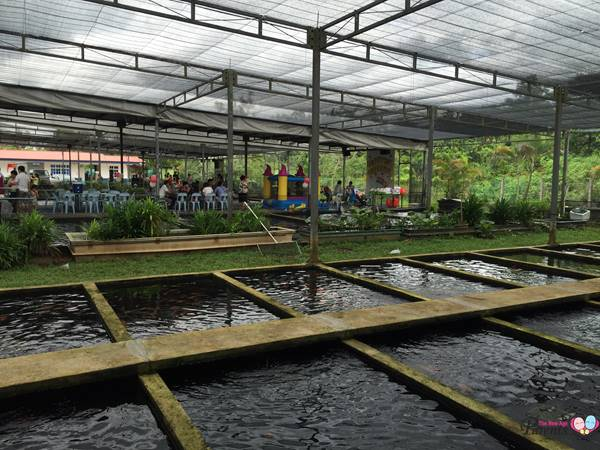 birthday parties at mainland tropical fish farm