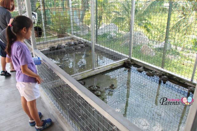 bullfrog and tortoise feeding in animal farmart singapore