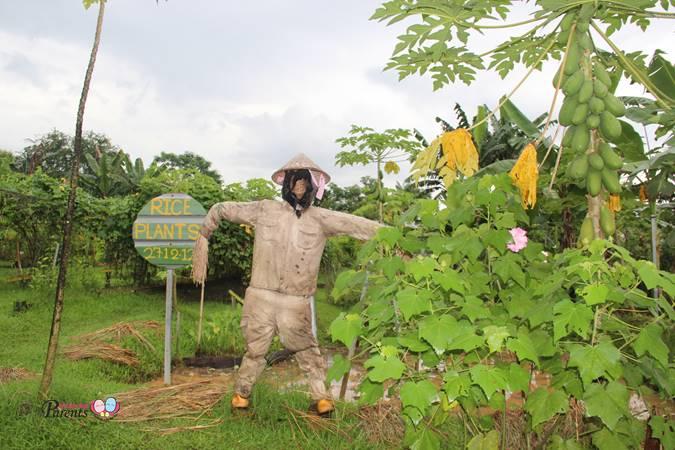 cool scarecrow at singapore bollywood veggies farm