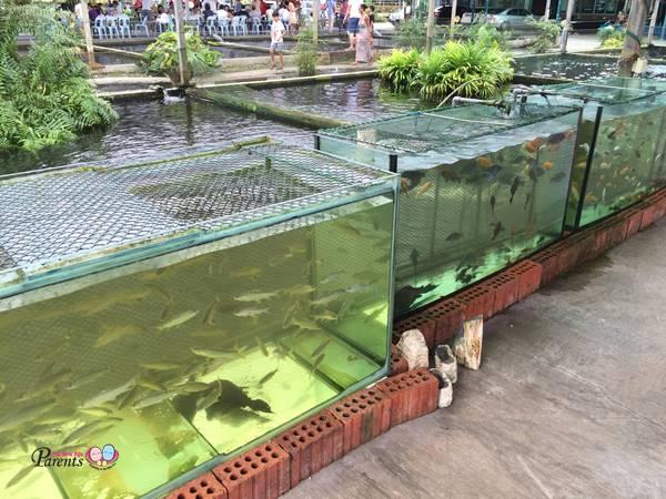 display tanks in fish farm singapore
