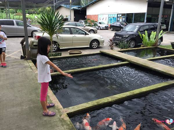 fish feeding in mainland fish farm