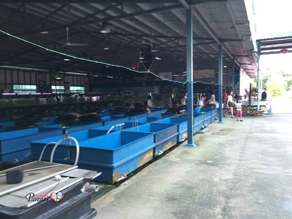 mainland tropical fish farm pasir ris