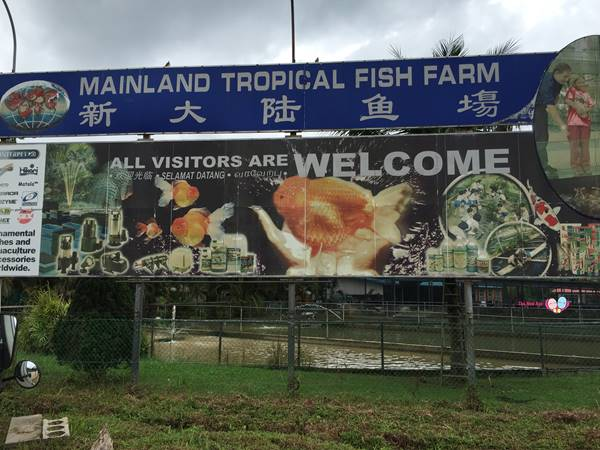 mainland tropical fish farm singapore address