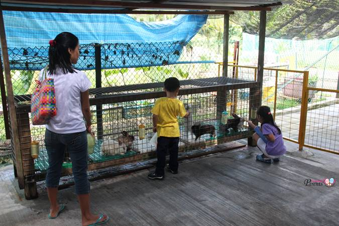 rabbit feeding in animal farm singapore