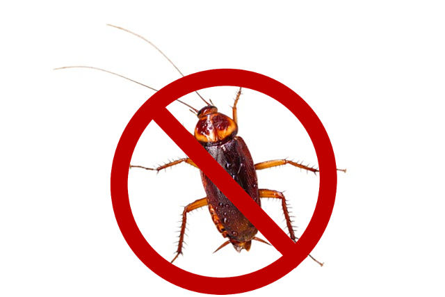 tips on getting rid of cockroaches