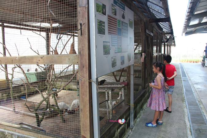 animal corner in kranji weekend farm