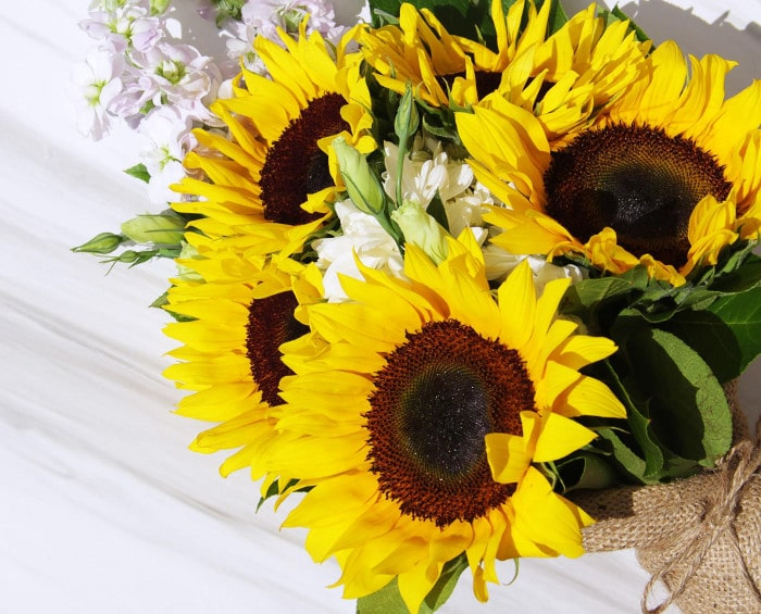 Beautiful Flowers Under $100