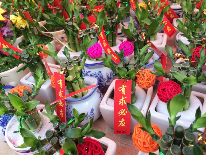 chinese-new-year-plants
